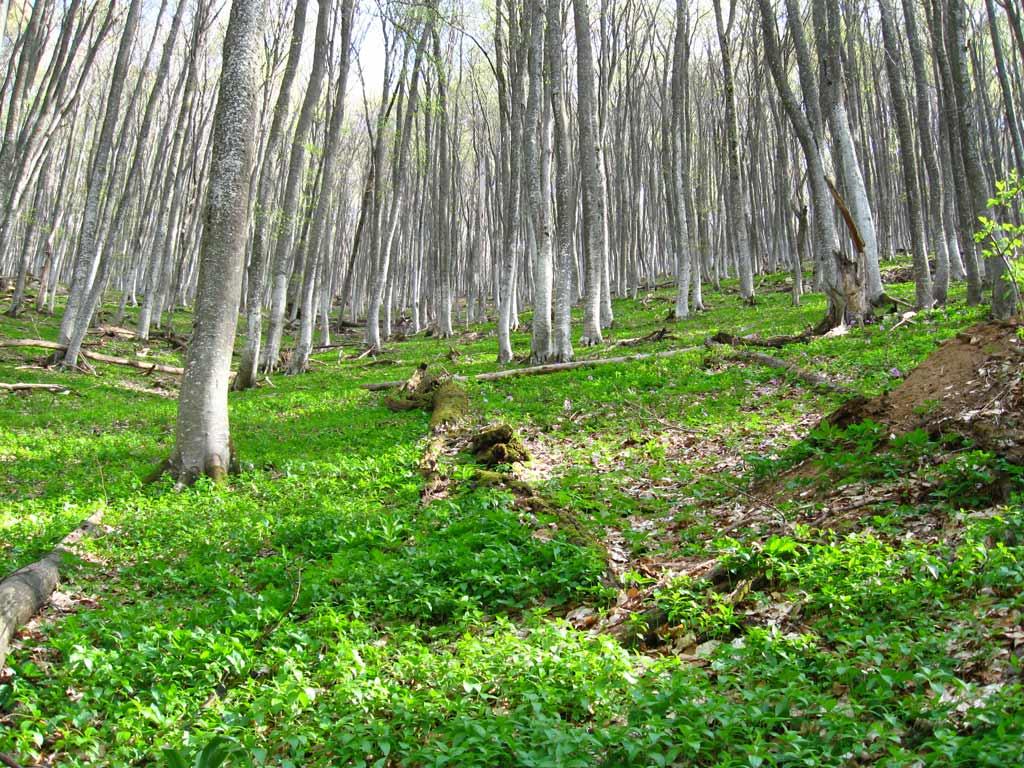 Весенняя природа горного Крыма