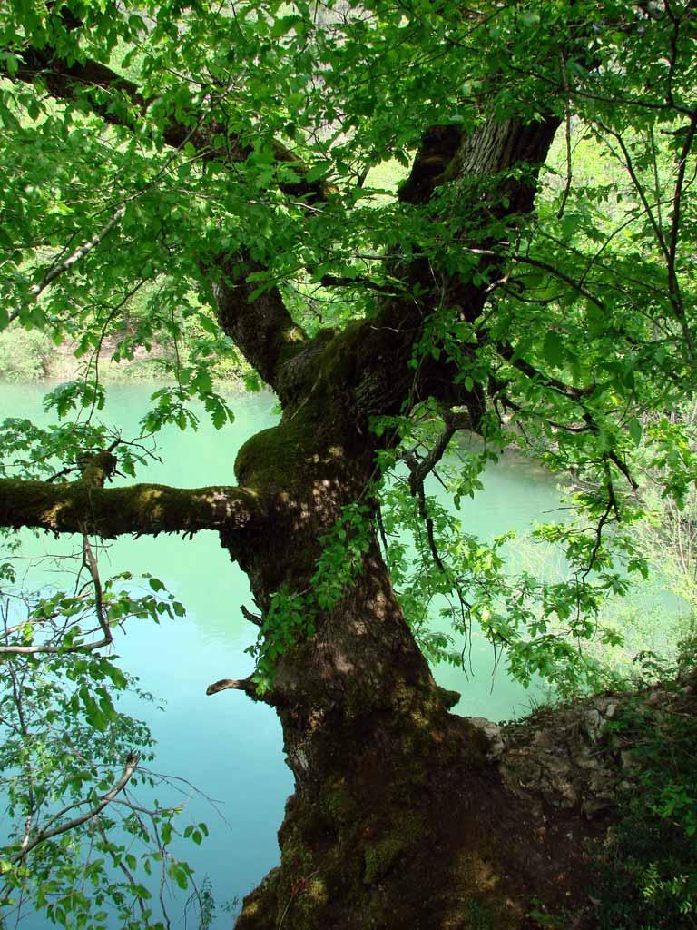 Дерево на озере