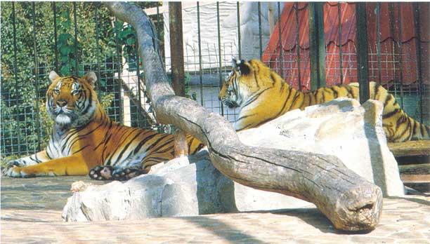 Ялтинский зоопарк «Сказка»