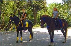 Конные прогулки на историческом бульваре