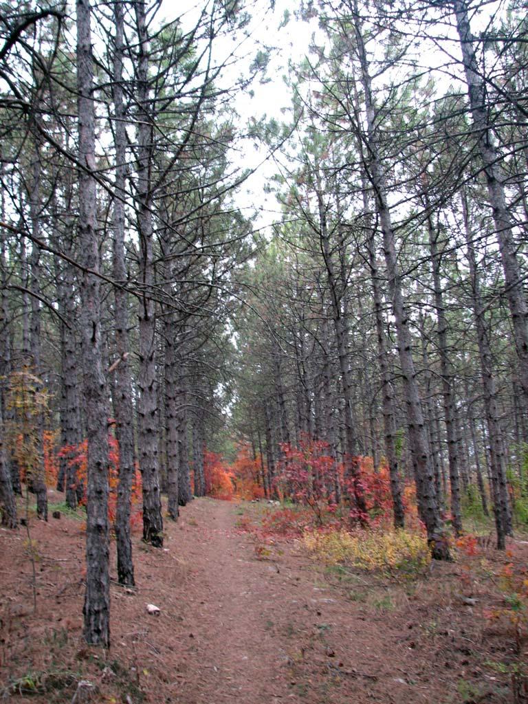 осенний лес возле Пневматики