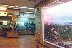 Музей природы в Алуште